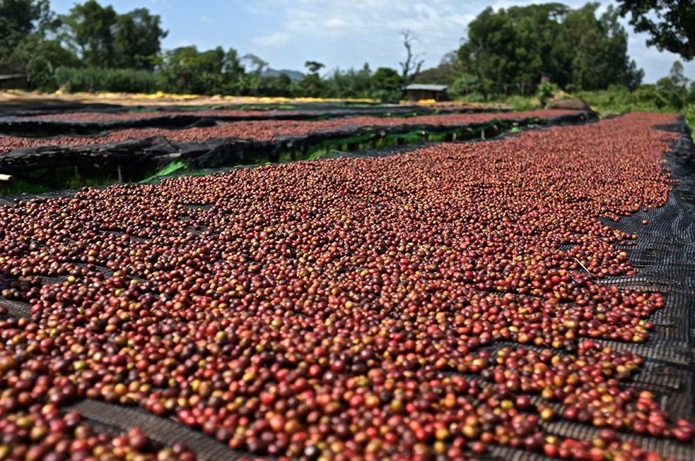 Kenya Karatina